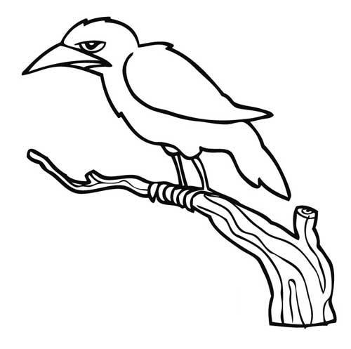 Animales para colorear: Cuervo