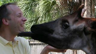 Funny Okapi