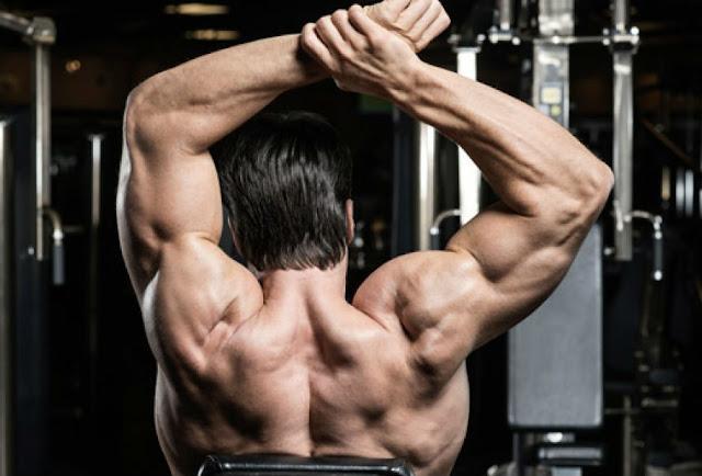 Shoulder Workouts