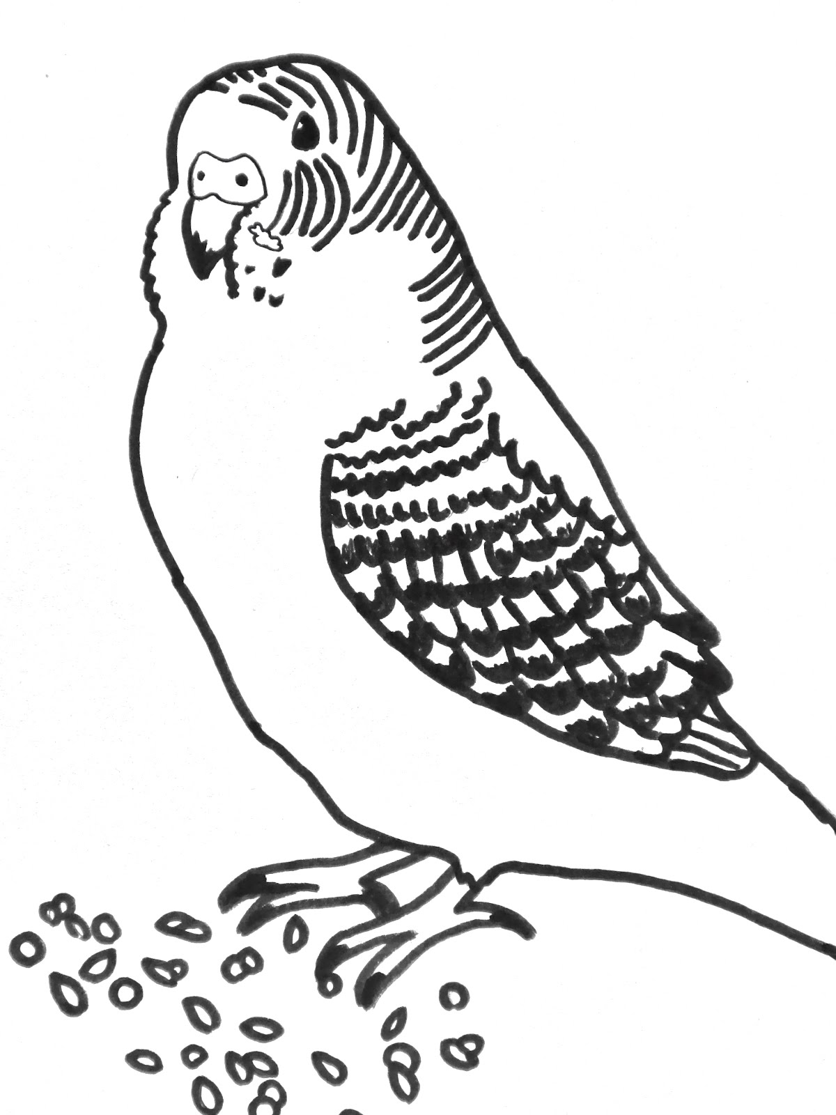 budgie coloring pages - photo#17