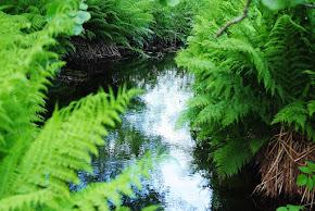Läs min andra artikel om Naturträdgård på Odla.nu