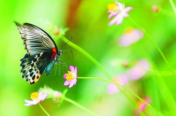 gambar hewan - foto kupu kupu bergerak