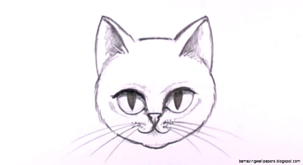 Easy cat drawings in pencil amazing wallpapers for Easy and amazing drawings