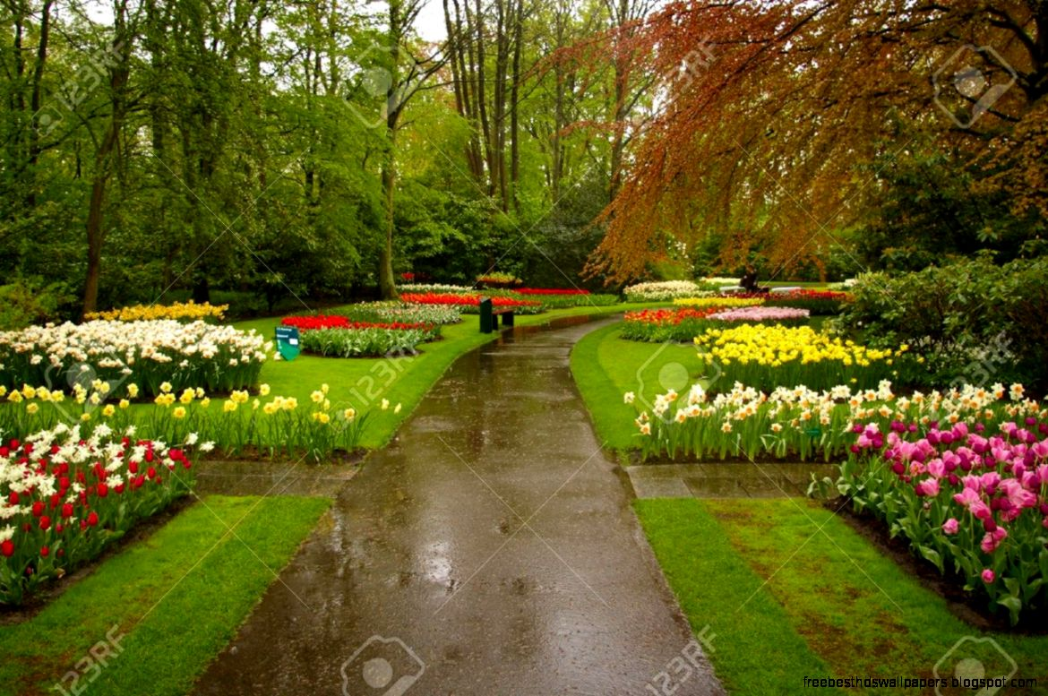 Beautiful Flowers Park Free Best Hd Wallpapers