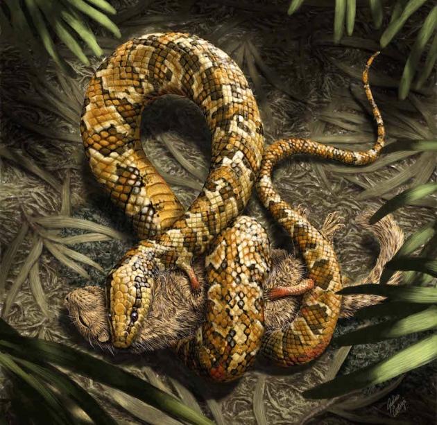 tetrapodophis snake, transition fossil, evolution, science
