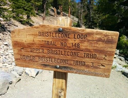 Bristlecone Loop Trail | Mt Charleston, NV