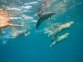 http://www.tropicallight.com/water/dolphins/07nov13dolphins/07nov13dolphins.html