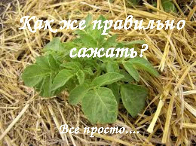 Салаты для детей - рецепты с фото на Повар. ру (140) 57
