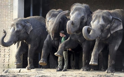 zoos Elephant News funny Photo