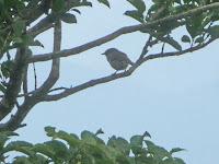木陰でウグイスが美しい声で鳴いていた
