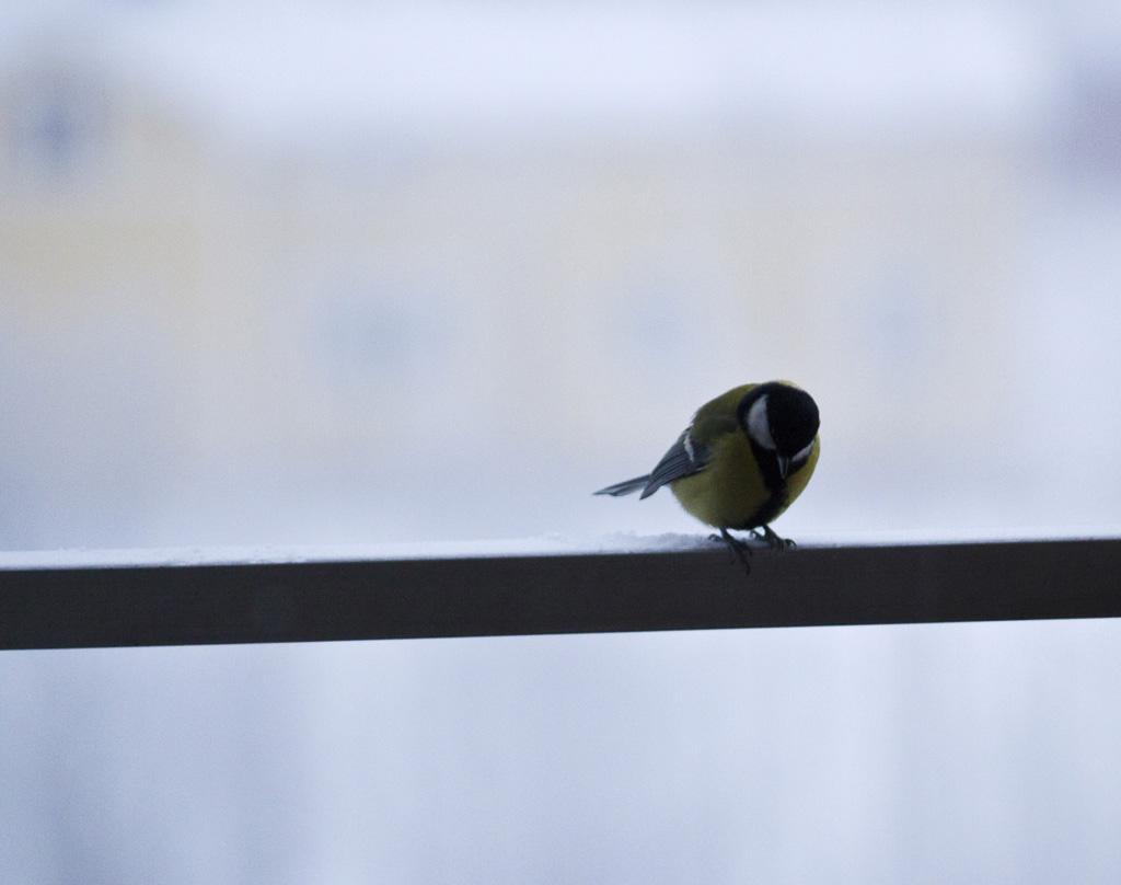 får man mata fåglar på balkongen