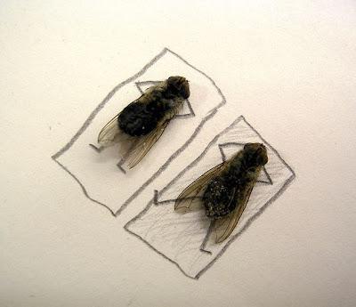 Afinal as moscas sao uteis depois de mortas Image006