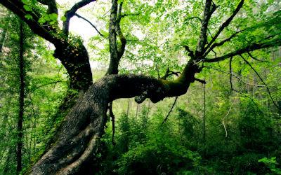De paseo por las profundidades del bosque natural