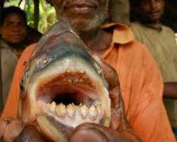 ikan makan alat vital