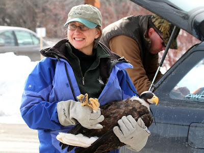 Harley the bald eagle arrives at Carpenter