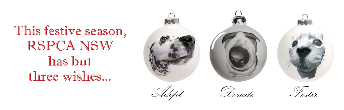 In style home decor yagoona rspca