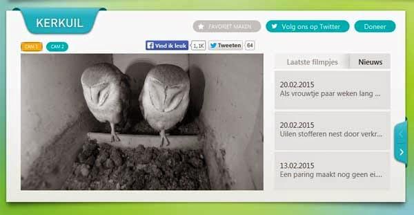 http://www.beleefdelente.nl/vogel/kerkuil