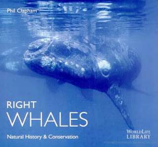 Whale Watching  Season Book Right Whales by Phil Clapham