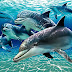Why We Should Save Dolphins If They Don't Taste Good ?