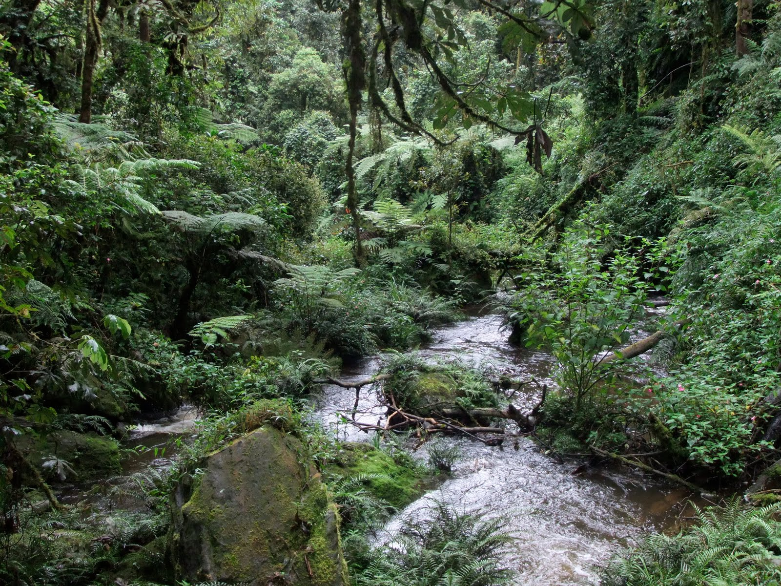 Biodiversity nexus rwanda the beauty of nyungwe national park and 13 primate species and spreading over 1000 square kilometres nyungwe national park is one of the most acclaimed biodiversity rainforests in africa sciox Image collections