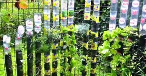 Fitorremediaci n del aire interior jard n vertical para for Jardin vertical cocina