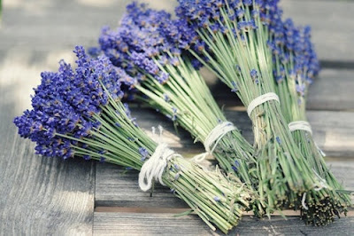 lavanda para regalar