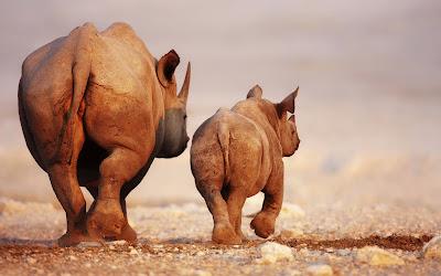 Ser Líder como Rinoceronte