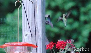 fly away hummingbird