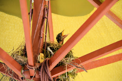 photo of robins nest by Nancy Zavada