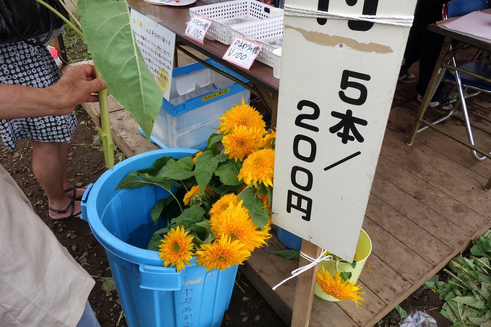 Sunflower Festival at Ibaraki chikusei tohoku yae japan