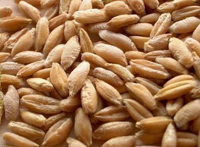 تحميل كتاب مكافحة الاعشاب فى محاصيل القمح والشعير