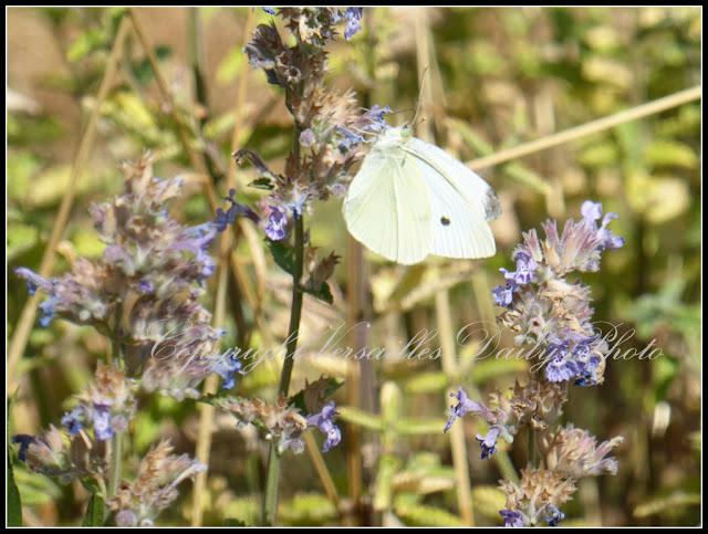 Papillon butterfly Versailles Domaine Madame Elisabeth