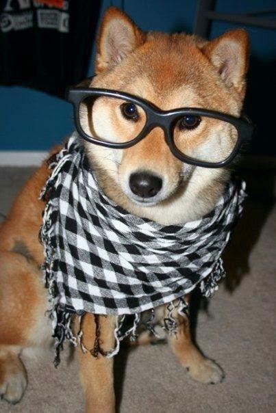 See more Shiba Inu http://cutepuppyanddog.blogspot.com/