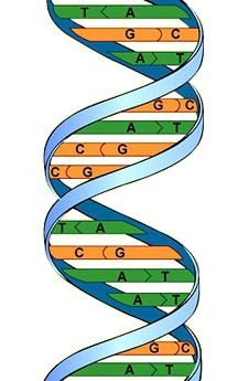 building baby from the genes up Owen tillger october 6, 2014 block 1 baby construction the article building baby from the genes up is an informational article based on the science of genetic manipulation the article is written by dr ronald green who strongly.