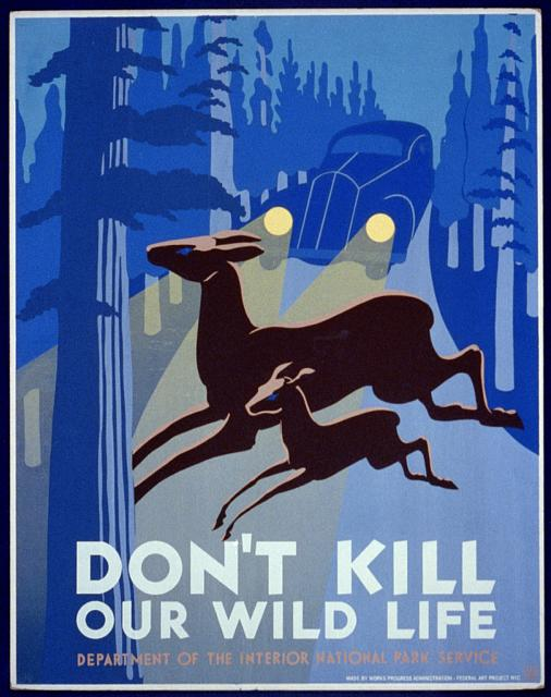 wildlife, wpa, national park, graphic design, vintage, classic posters, vintage posters, retro prints, deer, car, Don't Kill Our Wild Life - Vintage Wildlife Animal Poster - Dept of Interior National Park Service