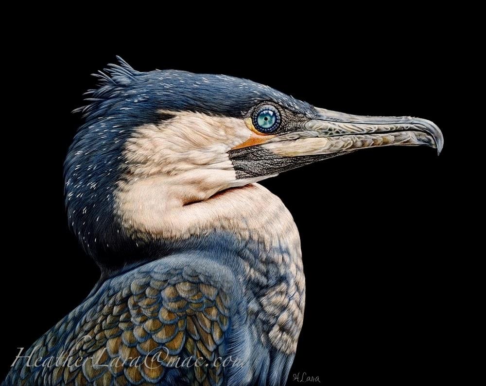 05-Cormorant-Heather-Lara-Hyper-realistic-Animal-Scratchboard-Drawings-Wildlife-www-designstack-co