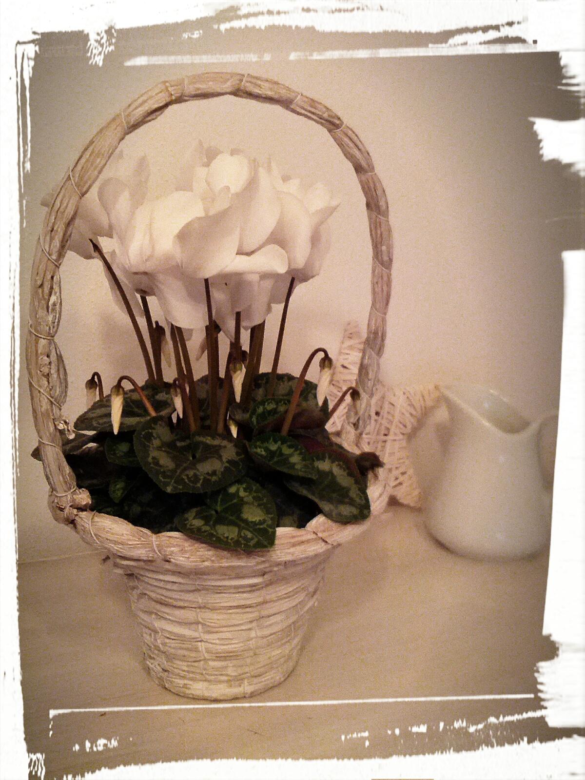 lina wolkenbogen silbermandel s welt blumen im januar. Black Bedroom Furniture Sets. Home Design Ideas