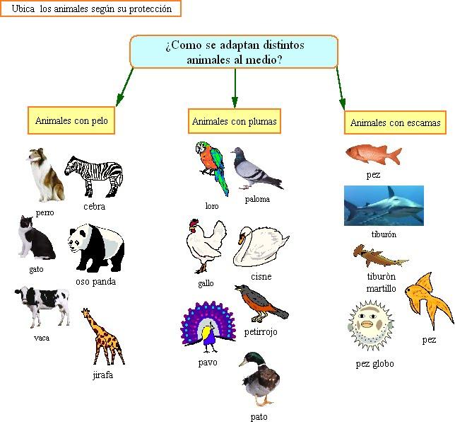Clasificacion de los animales segun su alimento imagui for Marmol clasificacion