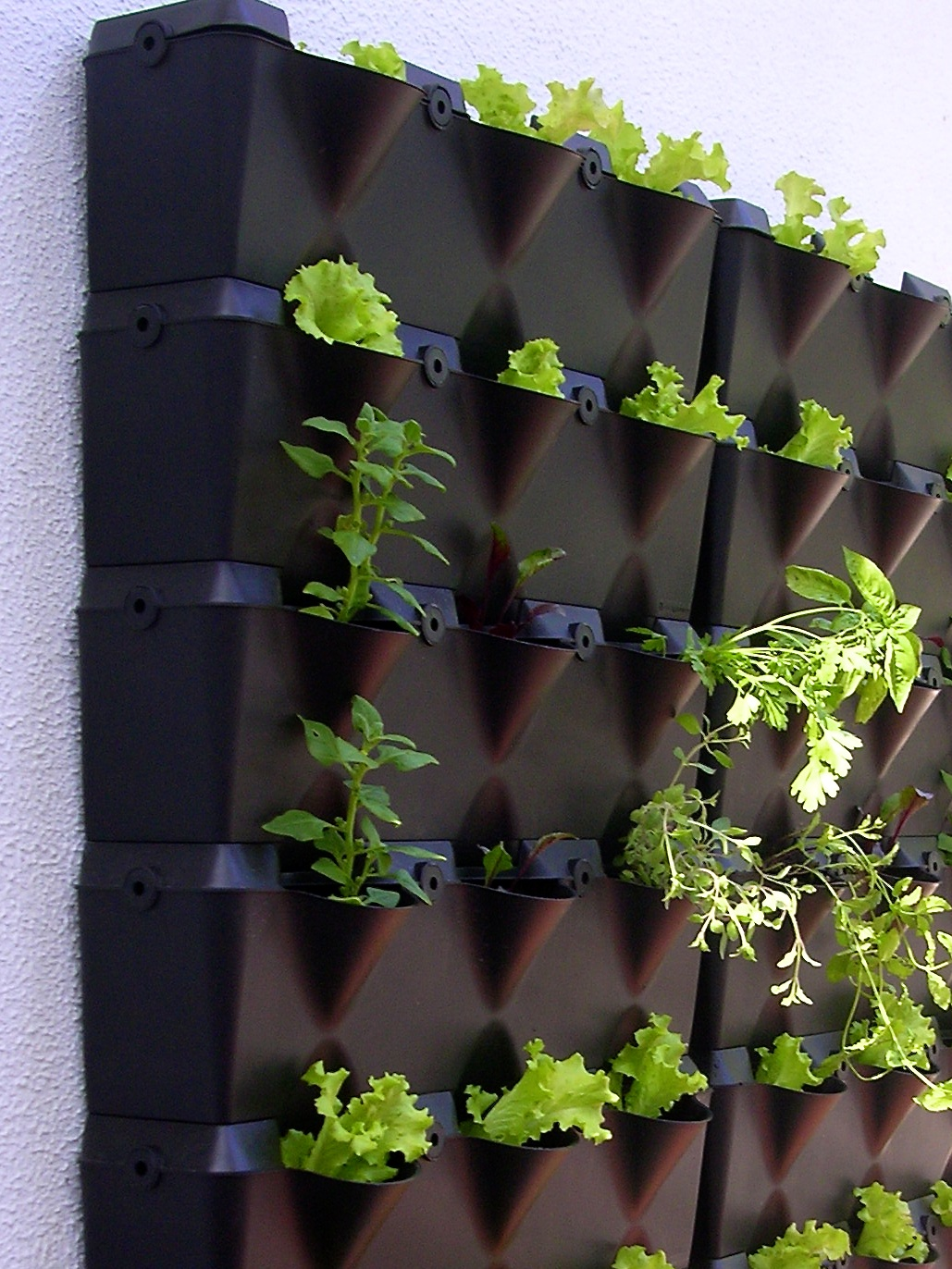 jardim vertical ribeirao preto:Horta em residência particular  #49631F 1029x1372 Banheiro Com Jardim Vertical