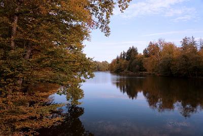 der Pfaffenwaldsee Stuttgart im Herbst