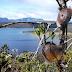 Danau Habema, Danau Tertinggi di Indonesia