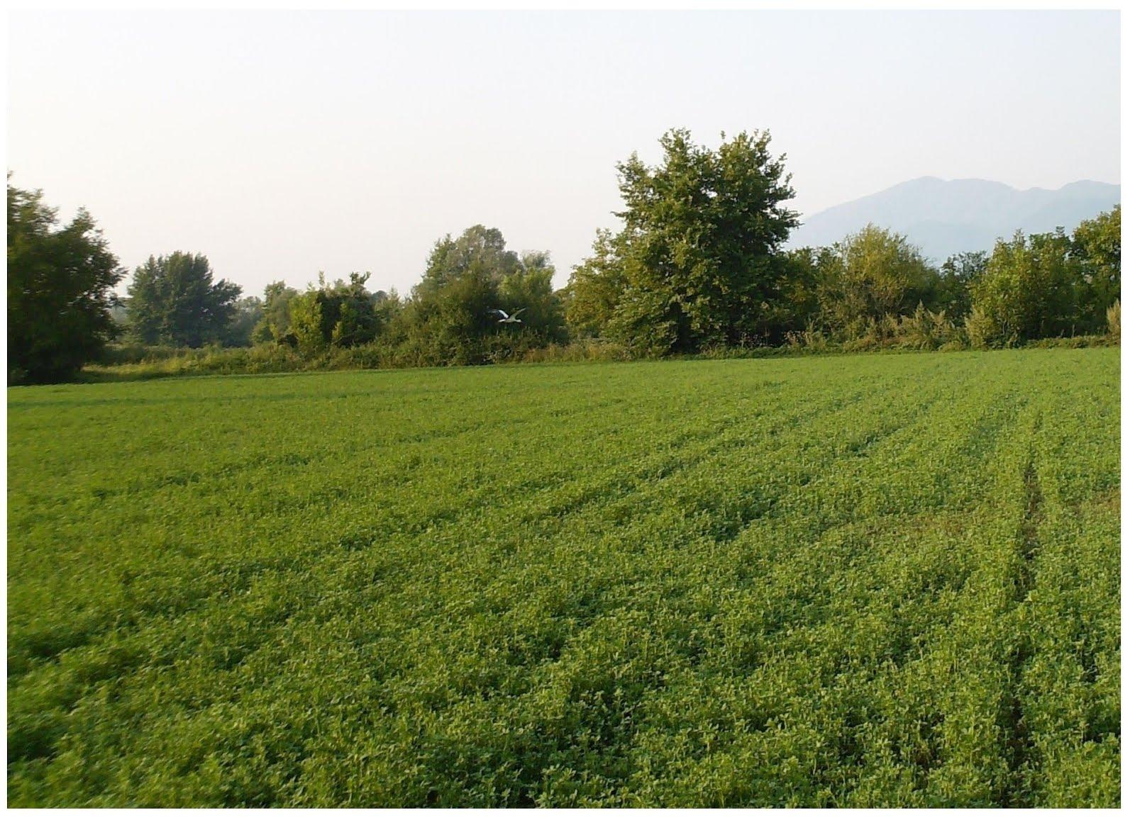 Παρακάλαμος: Πωλείται ποτιστικό αγροτεμάχιο σε τιμή ευκαιρίας