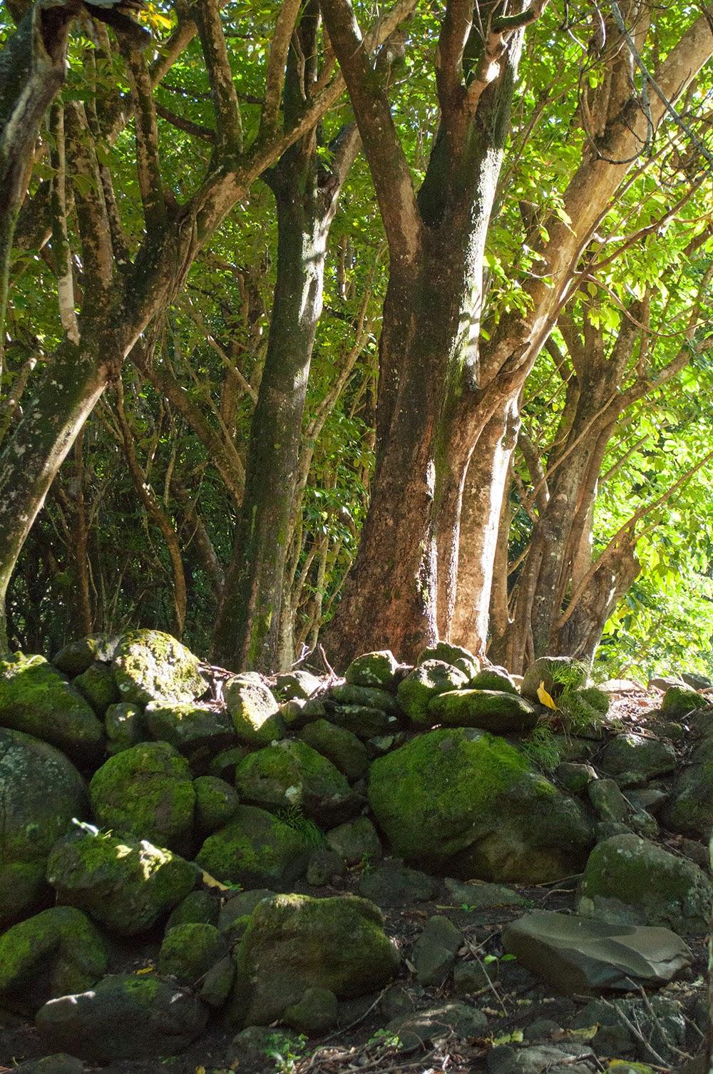 Joyful Rebellion: Kauai 2014: Limahuli Garden (day 12 part 2)