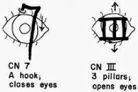 anatomy mnemonic