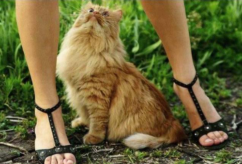 Todo fotos de gatos muy graciosas
