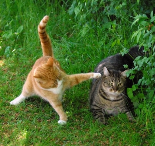 Dogs Fighting Big Cats