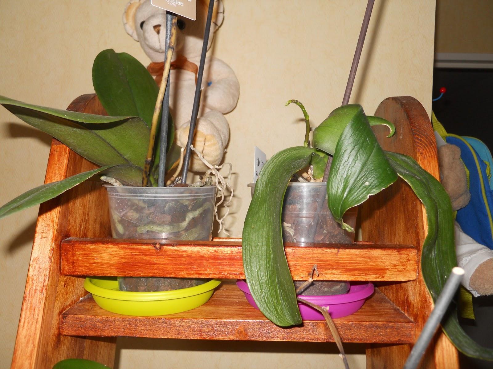 tout en peinture etag re orchid e. Black Bedroom Furniture Sets. Home Design Ideas