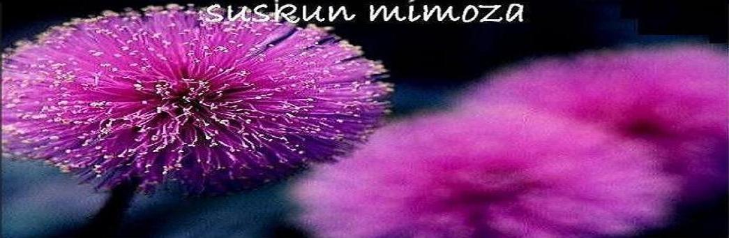 Suskun  Mimoza