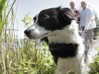 Urlaub mit Hund Belgien