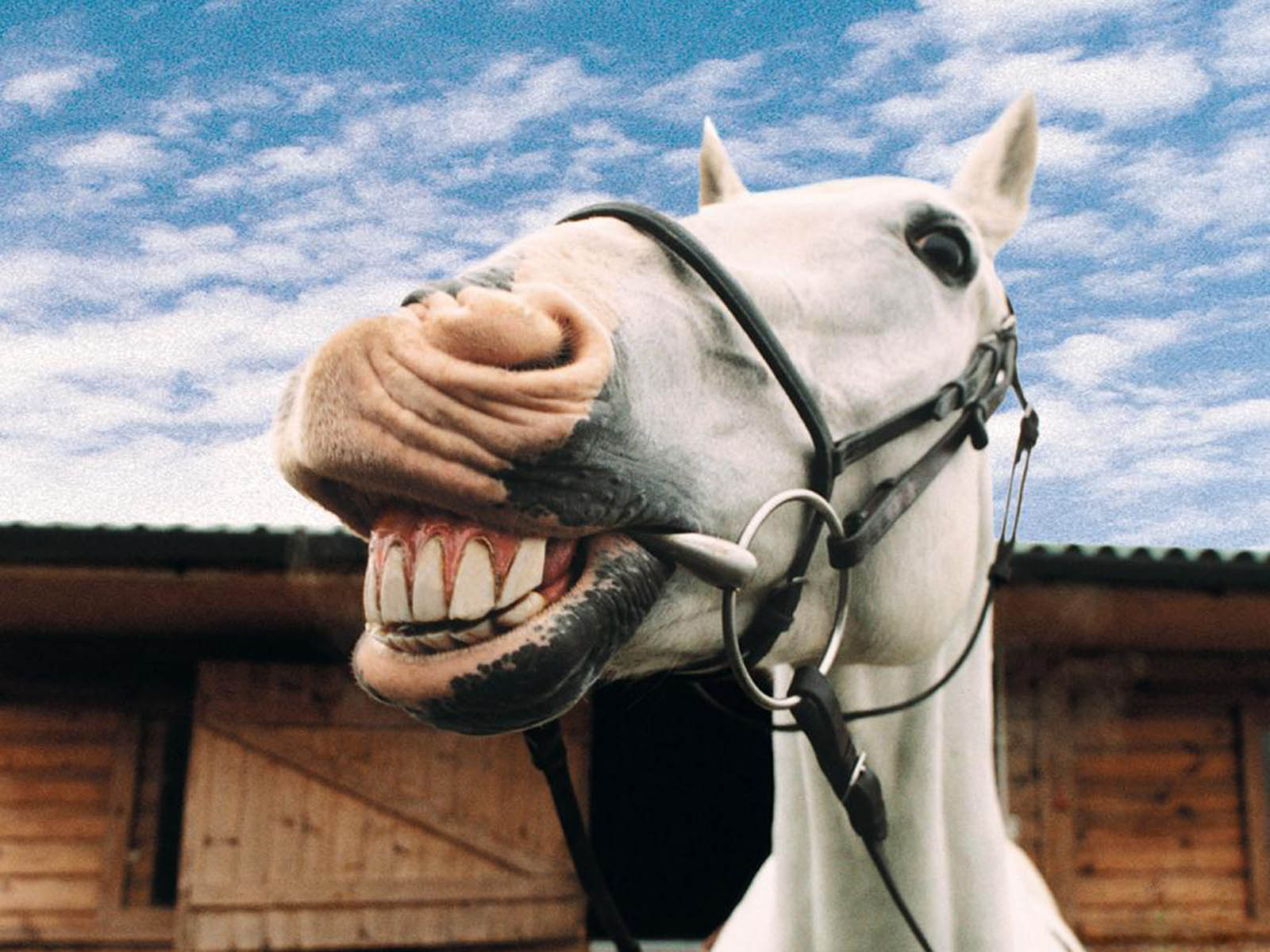 laughing animal wallpaper - photo #17